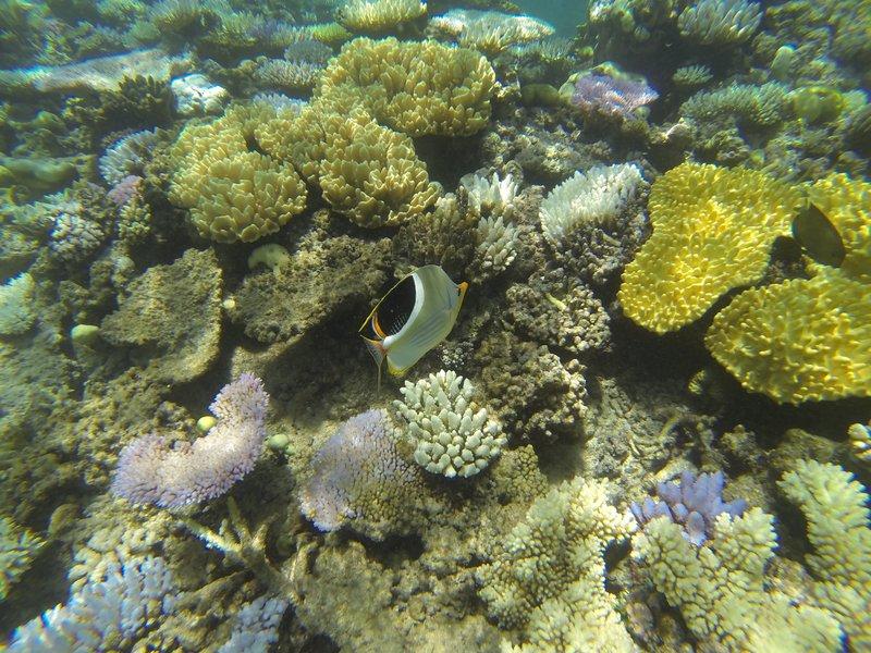 great barrier reef 5