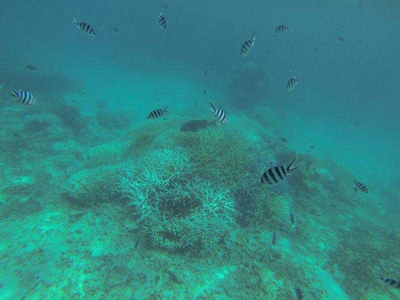 great barrier reef 4