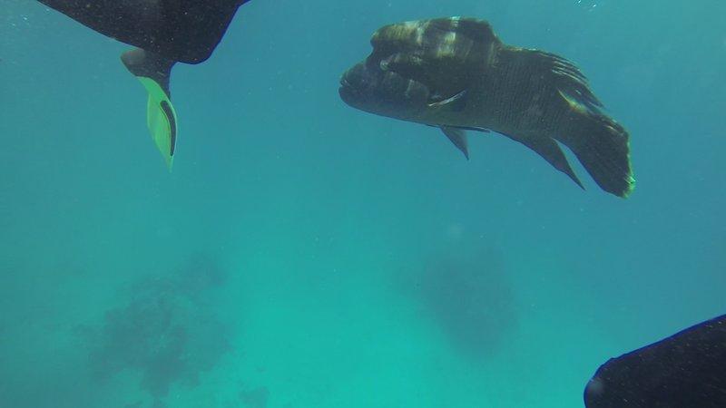 great barrier reef 3